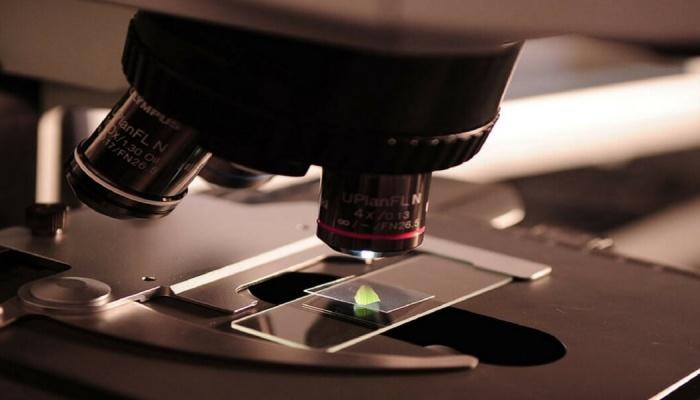 Cellule staminali e Tumori: Causa o Terapia?